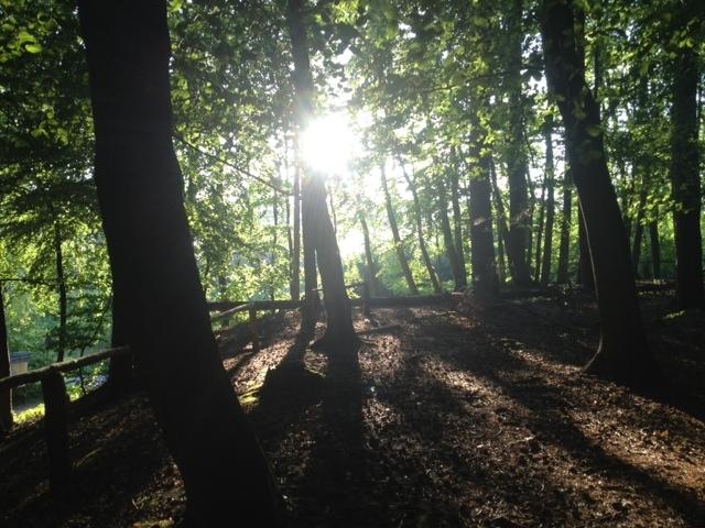 Bansin Wald Gegenlicht